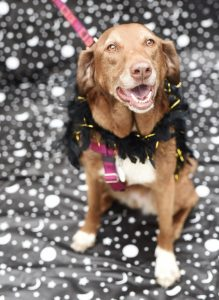 Pledge a donation today to help support our shelter animals for our Tricks for Treats adoption event