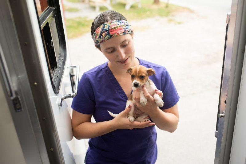 puppy at clinic spay neuter